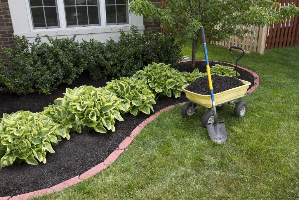 Mulch applied to the soil