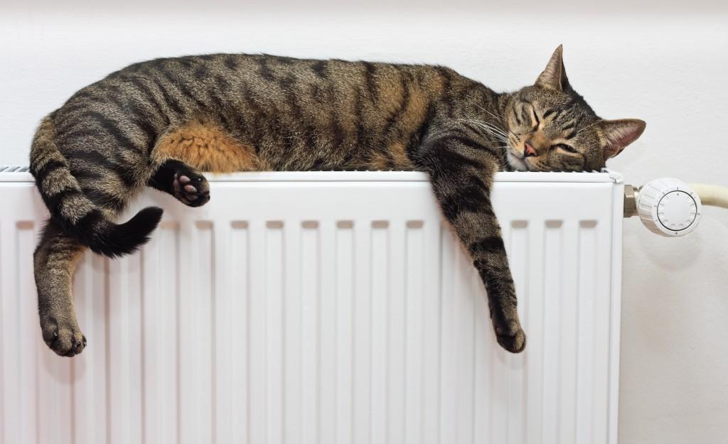 Cat sleeping on something