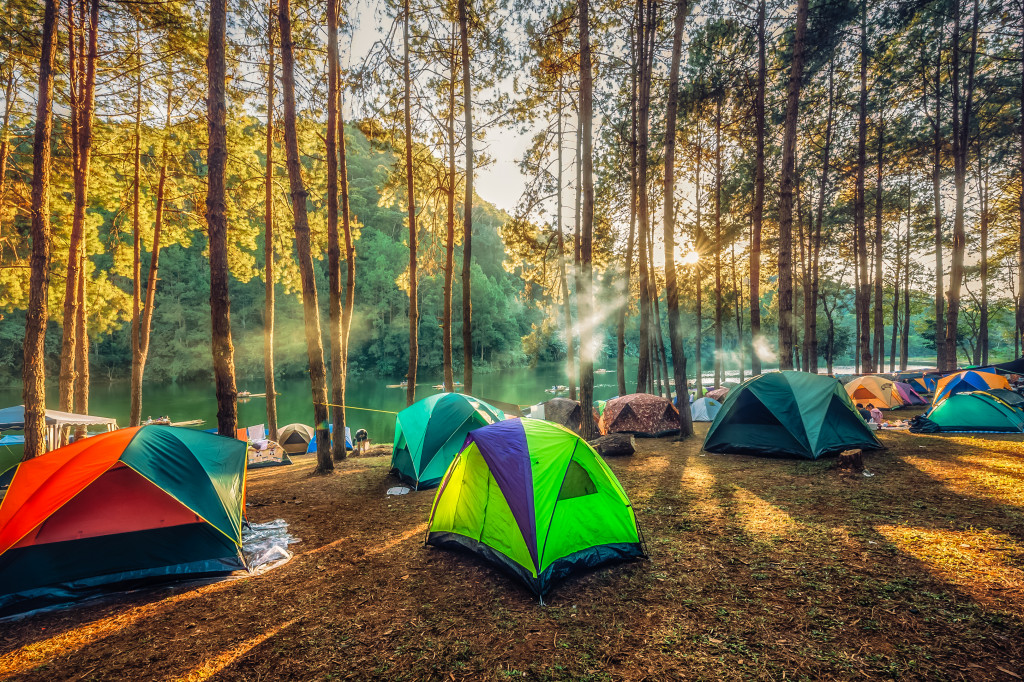 camping tents in the woods